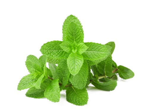 Picture of Spearmint Fresh Herbs - 28 g