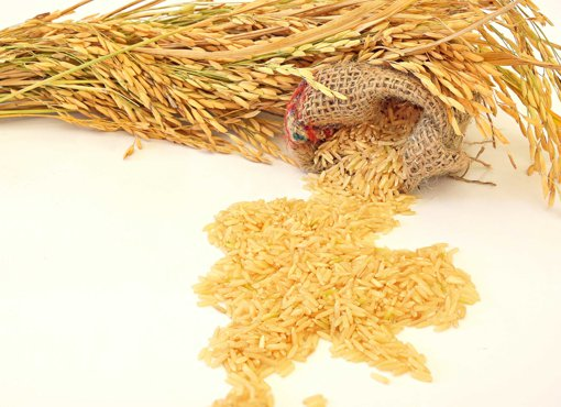 Picture of Golden Rose Brown Rice - per kg