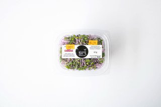Picture of Sprouts - Red Cabbage - Microgreens - 40 g